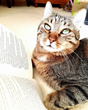 Katzenworld & International Cat Care team up with the Completely Cats Book