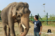 Yaduraj and Mohan meet at the Elephant Conservation and Care Center, Mathura, India.