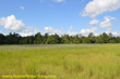 Hunting Property in Pearl River County, MS to Sell at Auction