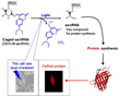 Okayama University Research: Photoreactive Compound Allows Protein Synthesis Control With Light