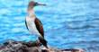 Goway Launches New Range of African Safari and Galapagos Tour Offers