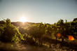 What's Cool in Carneros? Carneros Wine Alliance Members Unveil the Latest Experiences in Carneros