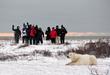 Polar bears and people at Churchill Wild.