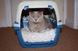 Katzenworld Presents Latest icatcare Study on How to Train a Cat
