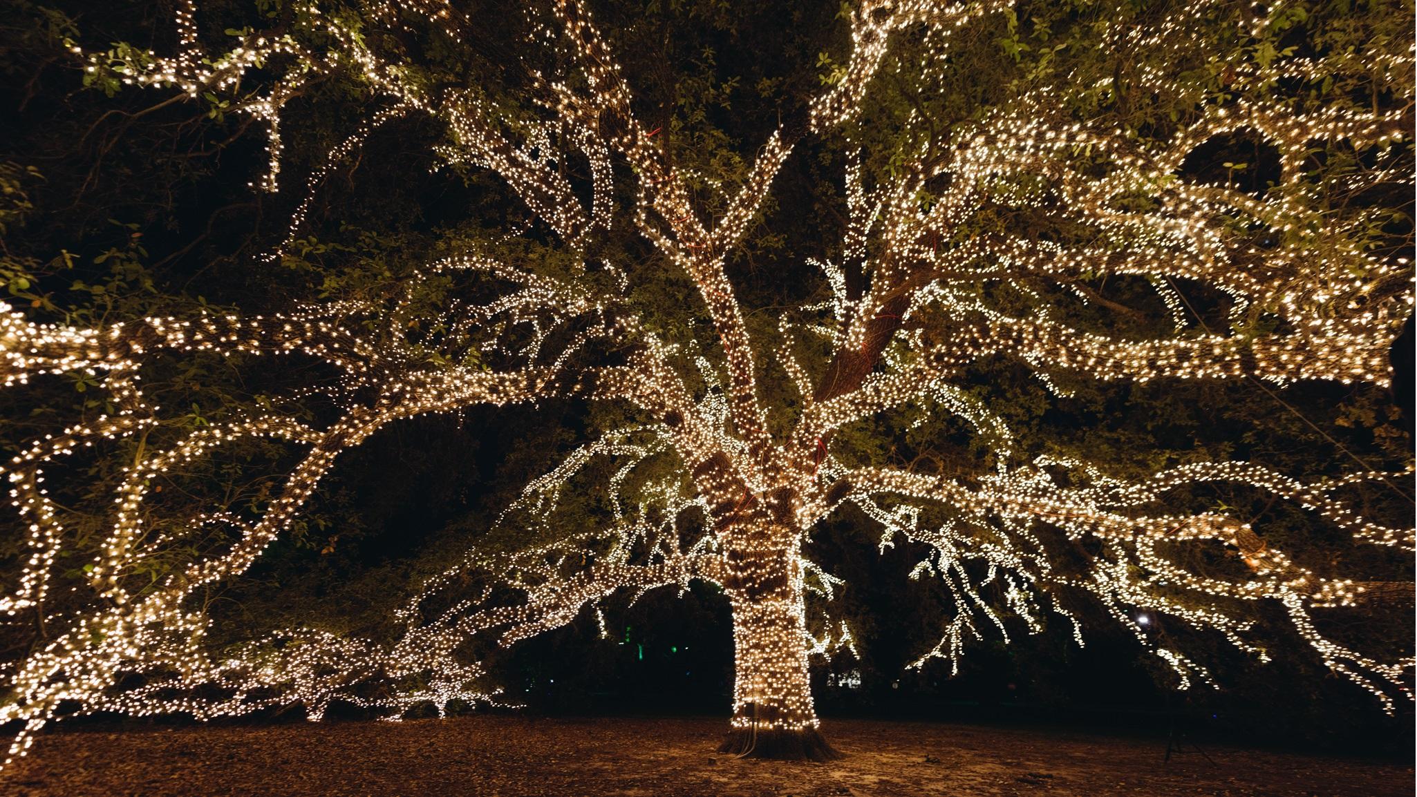 Santa Christmas Lights