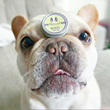 Ground Breaking Healing Balm from Natural Dog Company Receives Patent