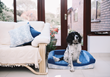 """Ralph & Co Completes Successful Crowdfunding on Indiegogo for its """"World's Best Dog Bed"""" Campaign"""