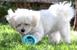 goDog® Gives Back Through #ThePowerofPlay with Durable New RhinoPlay™ Dog Toy Collection