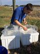 Biologist packaging live fish for transportation.