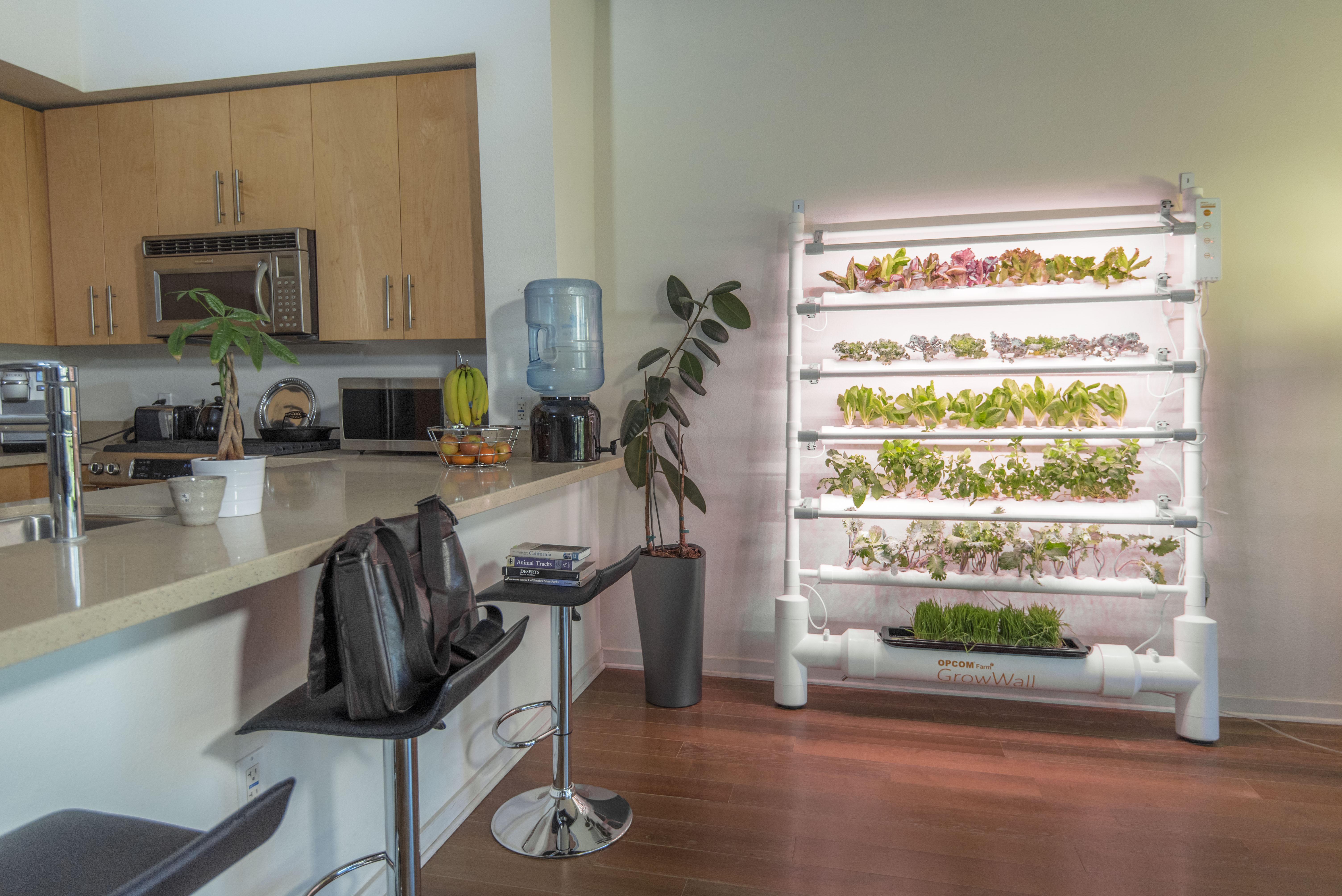 Для выращивания зелени в квартире