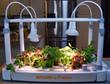 OPCOM Farm Makes Indoor Gardening as Easy as Plant, Pick and Plate