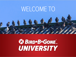 Welcome to Bird B Gone University