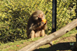 Leftover Halloween Pumpkins Become Zoo Animals' Delight