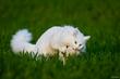 Katzenworld presents 4Cats study on Effect of Valerian on Felines