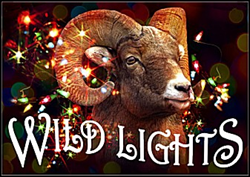 WildLights at the Living Desert Zoo