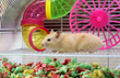 Healthy Pet's Carefresh® Colorful Creations Brings Living Color to Small Pet Spaces