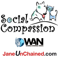 Champions for Change, which supports Social Compassion and its media partners, World Animal News and Jane UnChained.