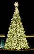 A 19-foot Christmas Tree will be at the head of the Wharf.