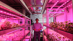 organic, hydroponic, terraponic, urban farming, sustainable, vertical farming