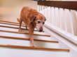 Pets Get Better With Age: New Trends in Caring for Senior Pets