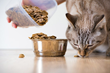 Katzenworld: How to Choose the Best Food for A Cat