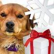 PetPace Releases Discounted Pricing: Give The Gift Of Good Pet Health