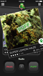Looking For Weed - Tinder-style Marijuana App Finds Ideal Strains