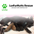 Dianne Michael Insurance Agency Launches Charity Drive to Gather Funding for the LuvFurMutts Animal Rescue in Cincinnati
