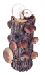 "Shiitake Mama Log Kit, a 10"" log with instructions and recipes and guaranteed to grow. $33, including s&h"
