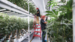 Fluence Bioengineering Illuminates MedMen Cannabis Vertical Farm