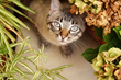 Katzenworld Presents Latest Cat Guide on Which Plants Are Safe for Cats