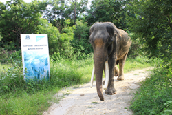 Suraj, a 45+-year-old elephant, was rescued by conservation group Wildlife SOS.