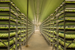 Fluence Bioengineering Illuminates Acres of Vertical Farm and Greenhouse Herb Production