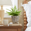 Costa Farms Shares Tips for Adding Pantone's Color of the Year to Any Space