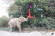 "It's a Wonderful Life for Mohan, Who Was Once Called the ""Unluckiest Elephant in the World"""