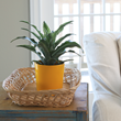 costa farms, indoor plants, greenery