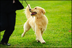 Kennel Club of Palm Springs Dog Show