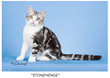 Katzenworld to attend LondonCats show in Leatherhead 7th &  8th of January 2017