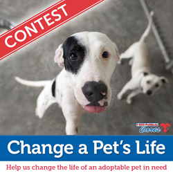 1-800-PetMeds Cares™ 2017 Change a Pet's Life Contest