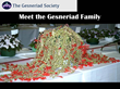 Meet the Gesneriad Family