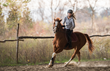 The Equine Saddle Ladder will allow anyone to enjoy horse riding.