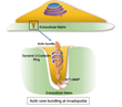 Okayama University Research: Enzyme Target for Slowing Bladder Cancer Invasion