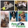 The Portale Agency and Pets Without Parents Rescue Announce Charity Event to Save Homeless Animals in the Columbus Region