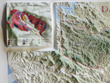 Daou Vineyards custom 3D map with inset map showing vineyard blocks by grape variety