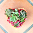 Succulents planted in a heart-shaped terracotta dish for Valentine's Day