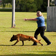 Reserved_Barking_Dog_Training