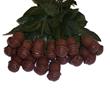 Lang's Chocolate Roses