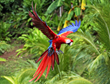 Birding Takes Off In Belize As Hot Vacation Trend With Chaa Creek Introducing New Avian Activities