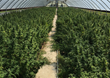 Bluebird Botanicals is Now Sourcing Hemp Extracts from Kentucky