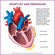 Higher Heart Fat Volume Post-Menopause Tied to Heart Disease, According to New Research Led by the University of Pittsburgh Graduate School of Public Health